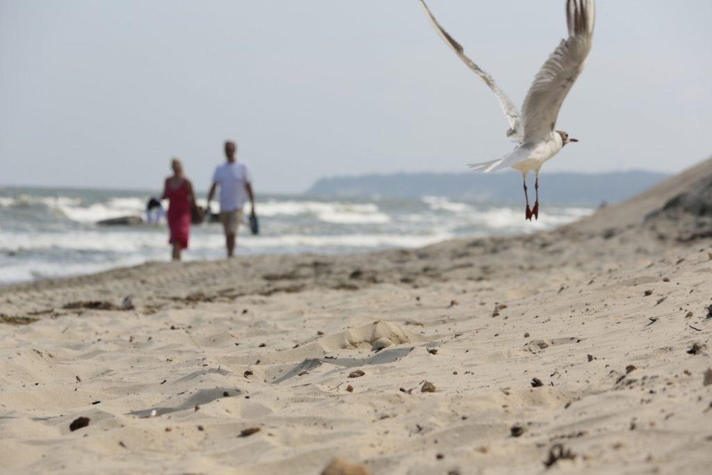 Möve am Strand von Rügen
